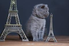 Visite proche Eiffel de portrait de chatons, d'isolement Images libres de droits