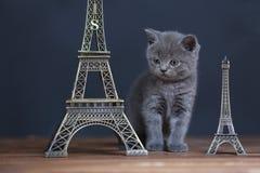 Visite proche Eiffel de portrait de chatons, d'isolement Photos stock