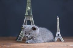 Visite proche Eiffel de portrait de chatons, d'isolement Image libre de droits