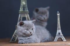 Visite proche Eiffel de portrait de chatons, d'isolement Photographie stock libre de droits