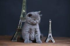 Visite proche Eiffel de portrait de chatons, d'isolement Photo stock