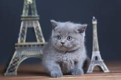 Visite proche Eiffel de portrait de chatons, d'isolement Photo libre de droits