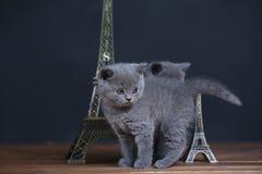 Visite proche Eiffel de portrait de chatons, d'isolement Photos libres de droits