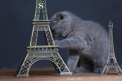 Visite proche Eiffel de portrait de chatons, d'isolement Images stock