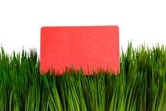 Visitenkarte und grünes Gras Lizenzfreie Stockfotos