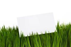 Visitenkarte und grünes Gras Stockfoto