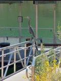 Visiteur de dock de pêche Photo libre de droits