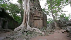 Visiteur lisant la carte de syndicat d'initiative dans le temple de Prohm de ventres, angkor banque de vidéos
