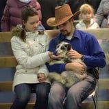 Visiteurs à l'exposition domestiquée de renards Photos libres de droits