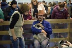 Visiteurs à l'exposition domestiquée de renards Photos stock