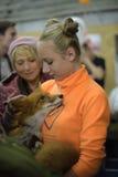 Visiteurs à l'exposition domestiquée de renards Photo libre de droits