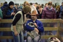 Visiteurs à l'exposition domestiquée de renards Images libres de droits