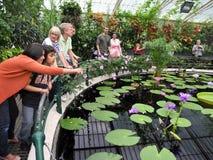 Visiteurs à la Chambre de Lilys, jardins de Kew Photographie stock libre de droits