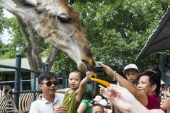 Visiteurs asiatiques alimentant une girafe Photographie stock