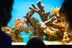 Visiting aquarium Stock Photography