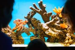 Visiting aquarium. Mother and children visiting aquarium stock photography
