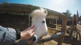 Visiting horse farm set stock footage