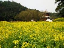 flower blossom in Spring stock photos
