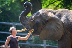 Visit the zoo and see zookeeper caring about shower and mouth hygiene for elephant in Wuppertal, Germany. Confidence, reliabityli