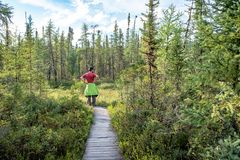 Visitor looking at the bog in Les Grands-Jardins National Park, Quebec royalty free stock photo