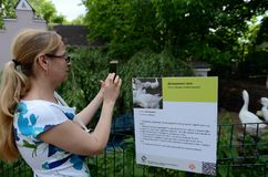 A visitor at the Moscow Zoo takes pictures of information about domestic geese. Royalty Free Stock Image