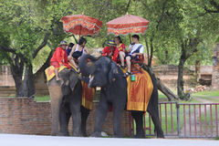 Visitor riding elephant back in Ayuthaya province central of Thailand Stock Image