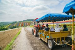Visitor taking truck to visit the famous and beautiful Panoramic Flower Gardens Shikisai-no-oka. Hokkaido, AUG 5: Visitor taking truck to visit the famous and stock photography