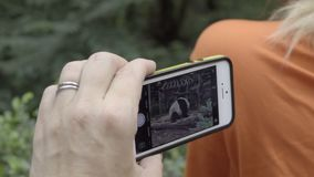 Visitor to a Panda parks takes a cell phone video. Visitor to a Panda parks takes a cell phone technology video stock footage