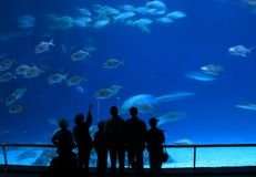 Visitors at Aquarium Stock Images