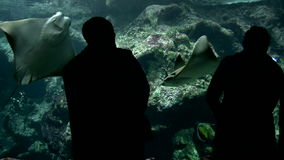 Visitors at the Aquarium Royalty Free Stock Photography