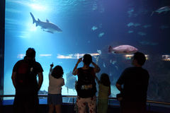 Visitors of an aquarium Stock Photography
