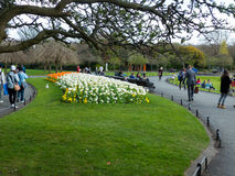 Visitors enjoy the beauty of Phoenix Park, in Dublin City, with its spring flowers and tulip beds. Visitors enjoy the early spring sunshine and beauty of the Royalty Free Stock Images
