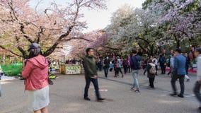 Visitors enjoy Cherry Blossom in Ueno Park Tokyo, Japan in Sakura Festival. 2018 stock video