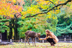 Visitors feed wild deer in Nara Royalty Free Stock Images