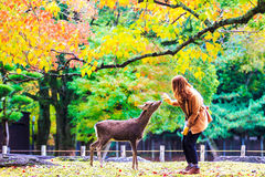 Visitors feed wild deer in Nara Stock Photography