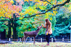 Visitors feed wild deer in Nara Royalty Free Stock Image