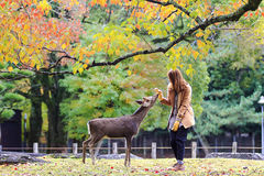 Visitors feed wild deer Stock Photography