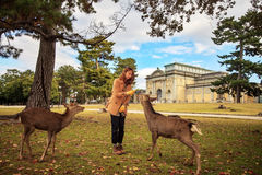 Visitors feed wild deer Stock Images