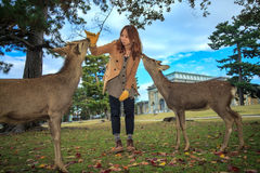 Visitors feed wild deer Royalty Free Stock Images