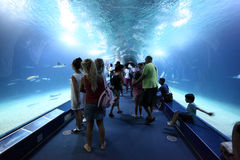 Visitors inside of the glass tunnel Royalty Free Stock Photos