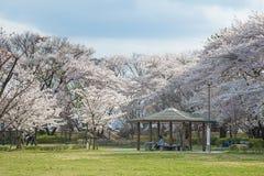 Visitors in Kajo castle park (Yamagata castle site park). Stock Image