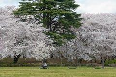 Visitors in Kajo castle park (Yamagata castle site park). Stock Photos