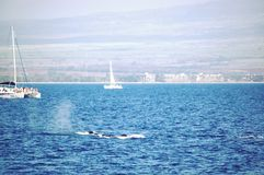 Hawaii Maui catamaran trip whale on the way stock photos