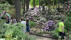 Visitors people admire colorful rhododendron blooms flower plant stock video