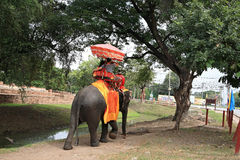 Visitors ride elephants to tour the ancient city Stock Image