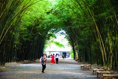 Visitors to the beautiful Bamboo arch at Wat Chulapornwanaram. The new famous tourist attraction of Nakhon Nayok, Thailand, June 2018 Royalty Free Stock Images