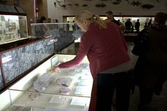 Visitors to the museum looking at the ancient animal fossils. Stock Image