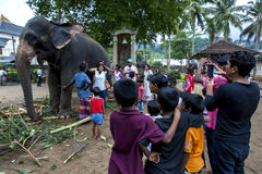 Visitors to the Temple of the Sacred Tooth Relic pose for photographs next to one of the ceremonial elephants in Kandy, Sri Lanka. Royalty Free Stock Photos