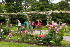 Visitors walking among  roses in  Cervantes Park Stock Photos