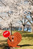 Warning at the cherry blossoms. Visitors are warned not to harm the cherry trees in Washington, DC royalty free stock photography